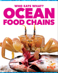 Who Eats What? Ocean Food Chains