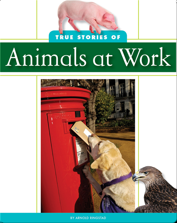 True Stories of Animal at Work