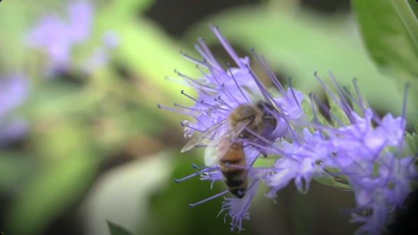 Amazing Honeybee Bodyparts!