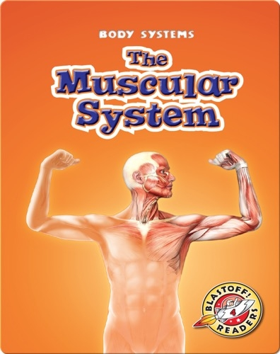 The Muscular System