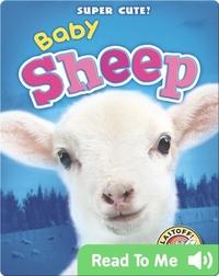 Super Cute! Baby Sheep