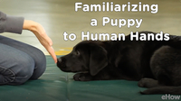 Familiarizing a Puppy to Human Hands | Teacher's Pet With Victoria Stilwell