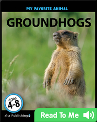 My Favorite Animal: Groundhogs