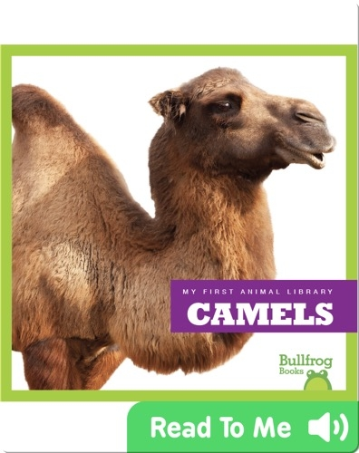 My First Animal Library: Camels