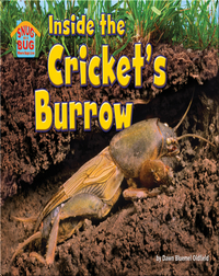 Inside the Cricket's Burrow