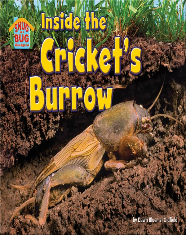 Inside the Cricket's Burrow