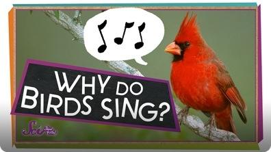SciShow Kids: Why Do Birds Sing?