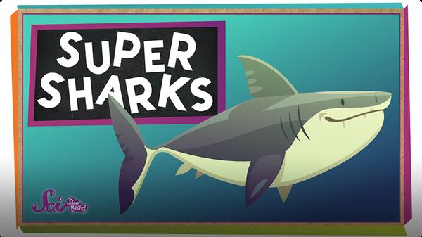 SciShow Kids: Super Sharks!