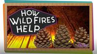 SciShow Kids: How Wildfires Help!
