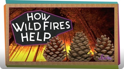 SciShow Kids: How Wildfires Help!