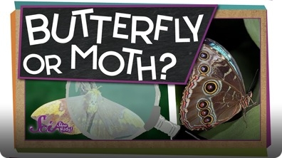 SciShow Kids: How Can You Tell a Butterfly From a Moth?