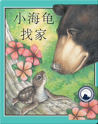 小海龟找家