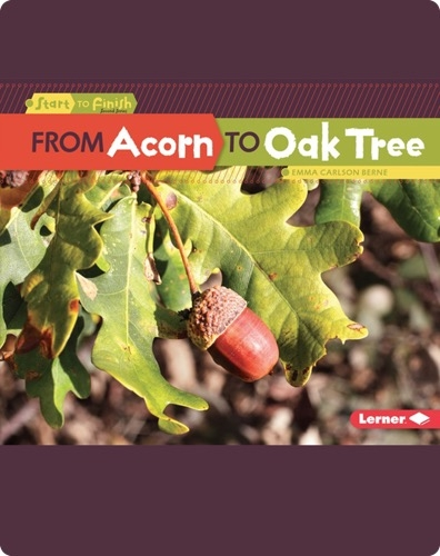 From Acorn to Oak Tree