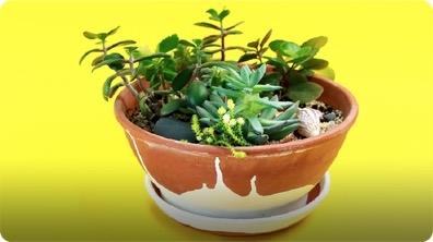 How to Make a Miniature Succulent Garden