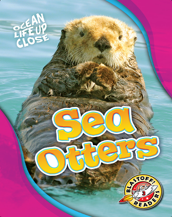 Ocean Life Up Close: Sea Otters