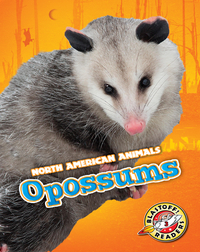 North American Animals: Opossums