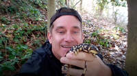 Brady Barr finds a Tiger Salamander