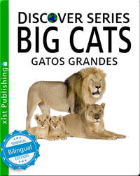 Gatos Grandes/Big Cats
