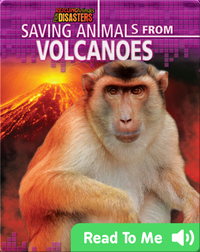 Saving Animals from Volcanoes