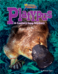 Platypus: A Century-long Mystery