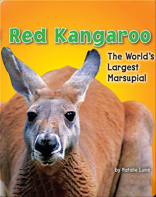 Red Kangaroo: The World's Largest Marsupial