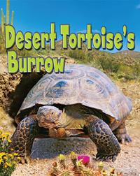 Desert Tortoise's Burrow