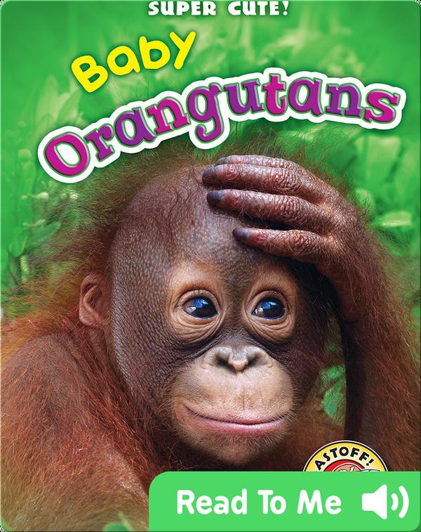 Super Cute! Baby Orangutans