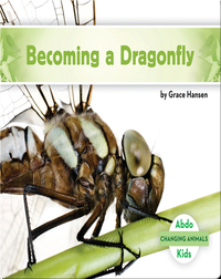 Becoming a Dragonfly