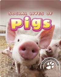 Social Lives of Pigs