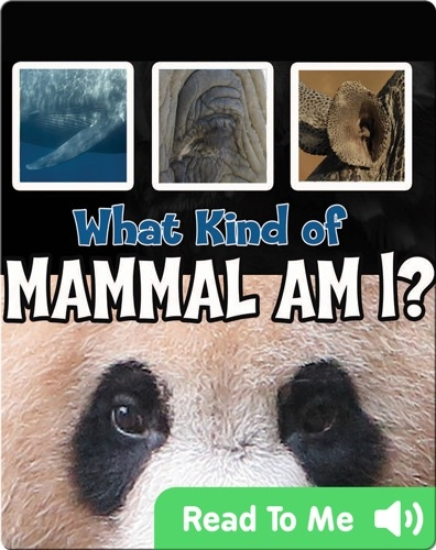 What Kind of Mammal Am I?