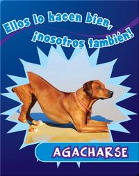 Agacharse
