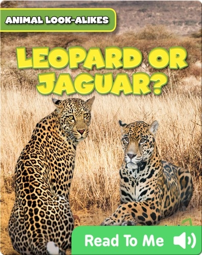 Leopard or Jaguar?