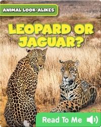 Leopard or Jaguar?