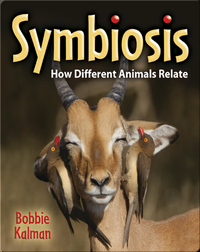 Symbiosis: How Different Animals Relate