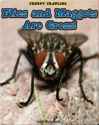 Flies and Maggots Are Gross!