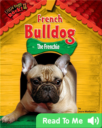 French Bulldog: The Frenchie