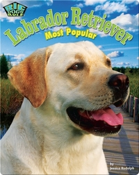 Labrador Retriever: Most Popular