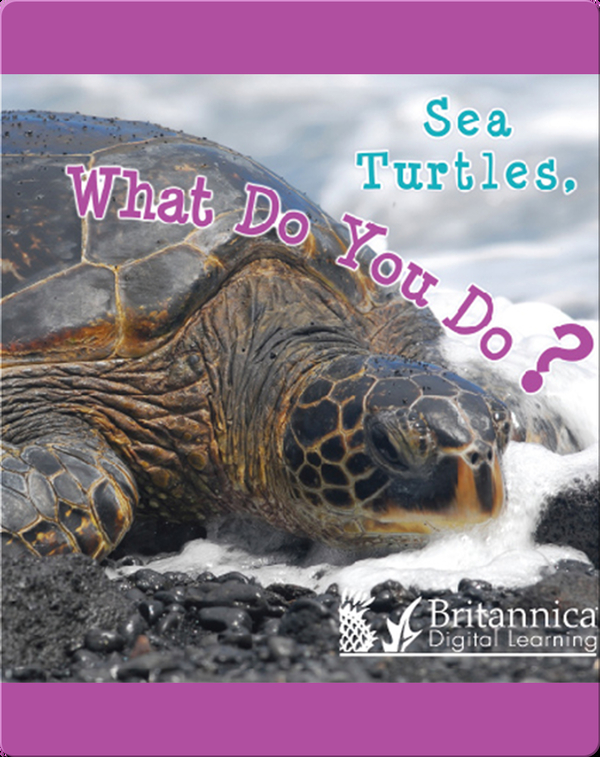 Sea Turtles, What Do You Do?