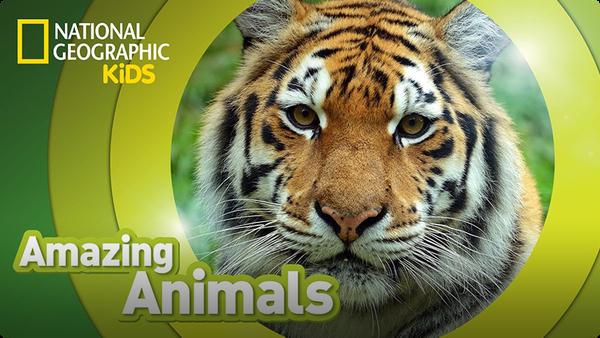 Amazing Animals: Tiger