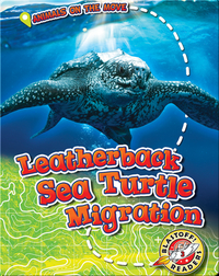 Leatherback Sea Turtle Migration