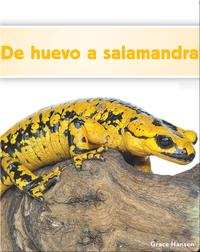 De huevo a salamandra