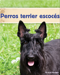 Perros terrier escocés