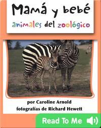 Mamá y bebé animales del zoológico