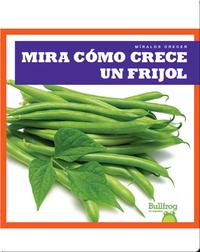 Mira cómo crece un frijol (Watch a Bean Grow)