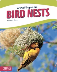 Animal Engineers: Bird Nests