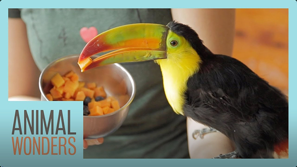 Baby Toucan's New Home