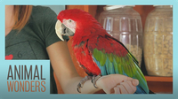 Meet and Greet: Scarlet The Green Wing Macaw