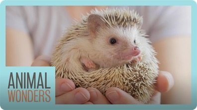 Meet and Greet: Tickles The Hedgehog