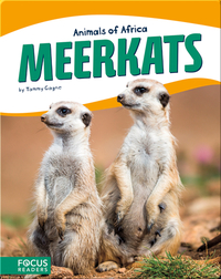 Animals of Africa: Meerkats