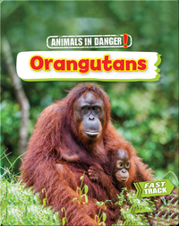 Animals in Danger: Orangutans